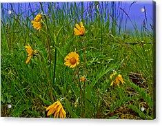 Wildflowers Acrylic Print by Jen TenBarge