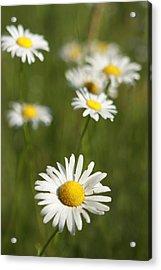 Wildflowers Acrylic Print by Kathryn Mayhue