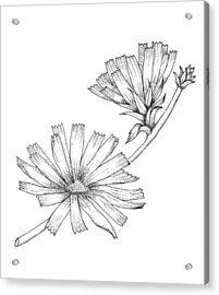 Wildflowers Acrylic Print by Marci Mongelli