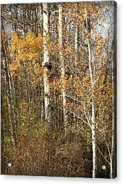 Acrylic Print featuring the photograph Wildlife Haven by Cindy Wright