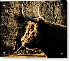 Wildthings Acrylic Print by Jessica Brawley