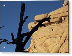 Will Desert Give Life Acrylic Print by Carolina Liechtenstein