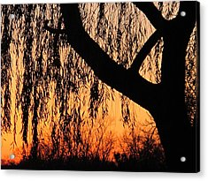 Willow At Sunset Acrylic Print by Valia Bradshaw