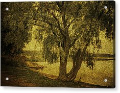 Willow At The Lake. Golden Green Series Acrylic Print by Jenny Rainbow