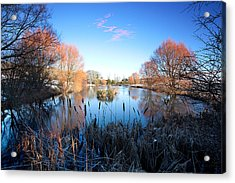 Willow Glow Acrylic Print