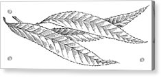 Willow Leaves, Woodcut Acrylic Print by Gary Hincks