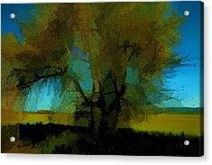 Willow Tree Acrylic Print by Bonnie Bruno