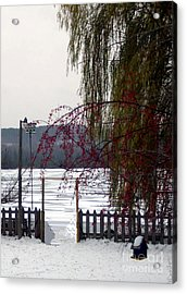 Willows And Berries In Winter Acrylic Print