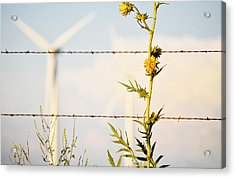Wind Blown Acrylic Print