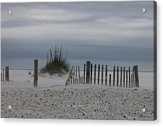 Wind Blown Acrylic Print by Deborah Hughes