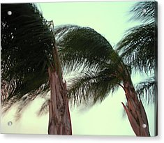 Wind Blown Acrylic Print by T Guy Spencer
