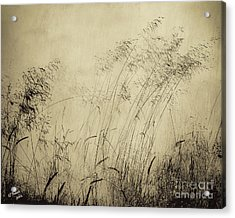Windblown Acrylic Print by Arne Hansen