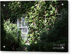 Window And Vines Acrylic Print