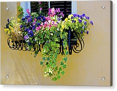 Window Box Acrylic Print by Ralph Jones