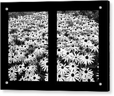 Window To Cheer Acrylic Print