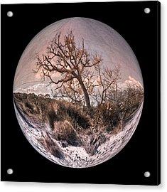 Windswept At Driftwood Beach II Acrylic Print by Debra and Dave Vanderlaan