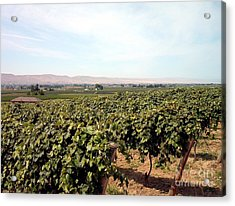 Wine Country Acrylic Print by Charles Robinson