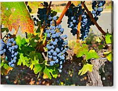 Wine Country Acrylic Print by Gloria Wannow