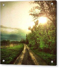 Wine Path Acrylic Print