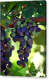 Wine To Be Acrylic Print