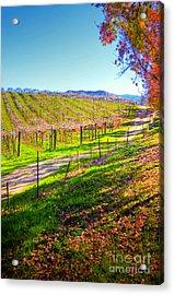 Winery Road Acrylic Print by Kelly Wade