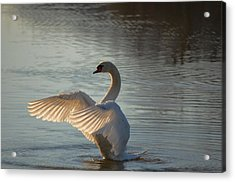 Acrylic Print featuring the photograph Wing Flapper by Brian Stevens