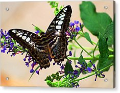 Wing Of Beauty Acrylic Print by Cheryl Cencich