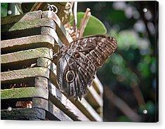 Winged Wood Acrylic Print