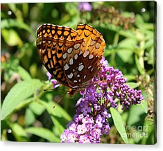 Wings Aglow Acrylic Print by Theresa Willingham