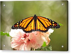 Acrylic Print featuring the photograph Wings At Rest by Kathy Gibbons