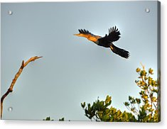 Wings Acrylic Print by Barry R Jones Jr