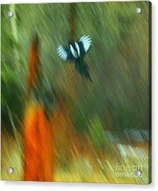 Wings Acrylic Print by Julie Lueders