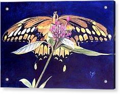 Wings Acrylic Print by Karen Casciani