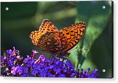 Wings Of Fire Acrylic Print by Cheryl Cencich