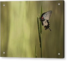 Wings Of The Heart Acrylic Print