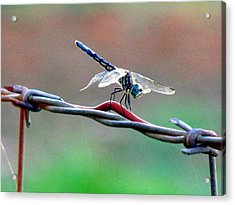 Wings Of Wire Acrylic Print