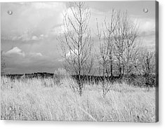 Acrylic Print featuring the photograph Winter Bare by Kathleen Grace