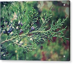 Acrylic Print featuring the photograph Winter Berries by Robin Dickinson