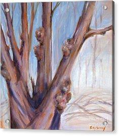 Winter Bones Acrylic Print by Sally Simon
