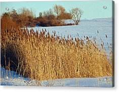 Winter Breeze Acrylic Print by Aimee L Maher Photography and Art Visit ALMGallerydotcom