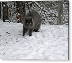 Winter Cat Acrylic Print by Tessa Priddy