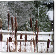 Winter Cattails Acrylic Print by Rand Swift