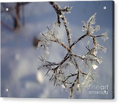 Winter Crystals Acrylic Print