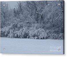 Winter Delight Acrylic Print by Cedric Hampton
