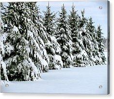 Winter Elegance Acrylic Print