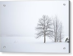 Winter Fog And Trees Acrylic Print