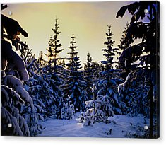 Winter Forest Acrylic Print by Hakon Soreide