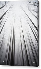 Winter Forest In Mist Acrylic Print by Jack Flash