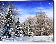 Winter Forest With Snow Acrylic Print by Elena Elisseeva