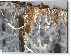 Winter Frost Beards Acrylic Print